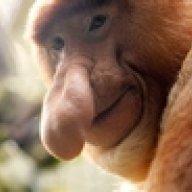 The Escaped Ape